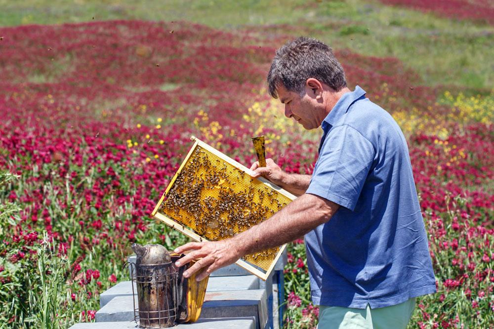apicoltura nell'azienda Carlo Amodeo