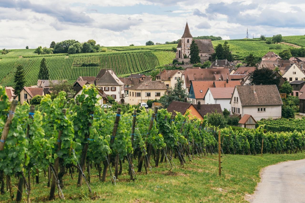 vigne della borgogna in francia