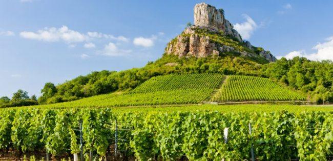distesa vitigno regione borgogna francia