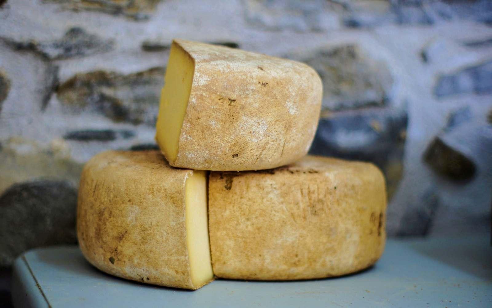 tre meze forme di formaggi di fossa
