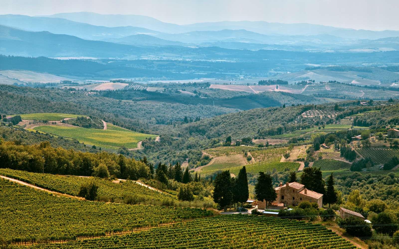 distesa panoramica sulle vigne del chianti classico